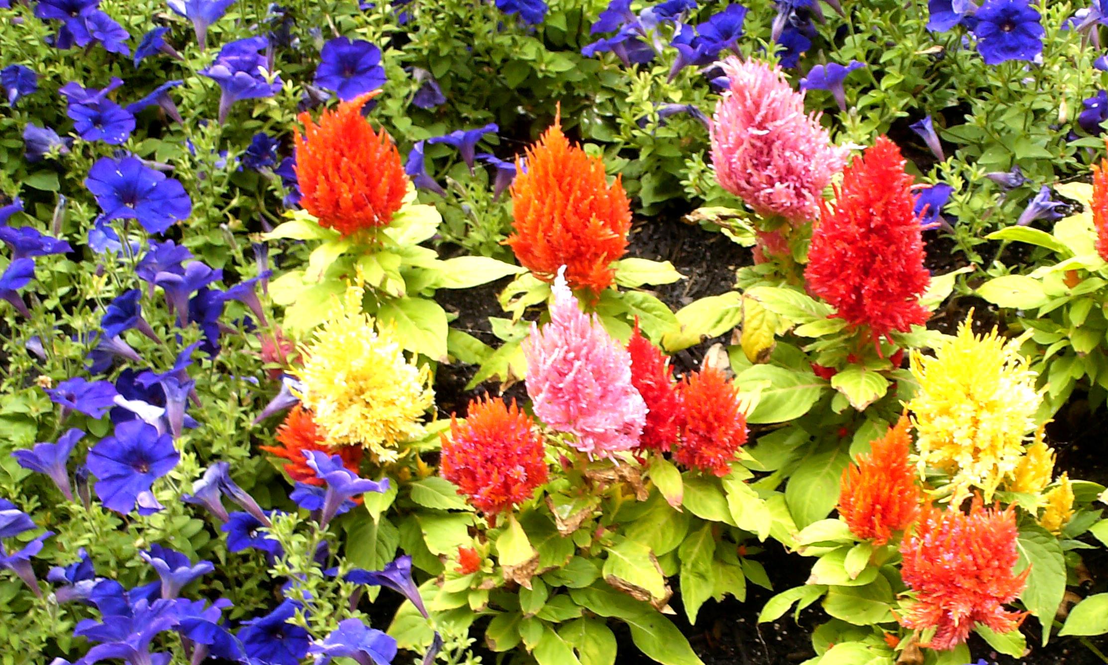 Riverwalk Flowerbed