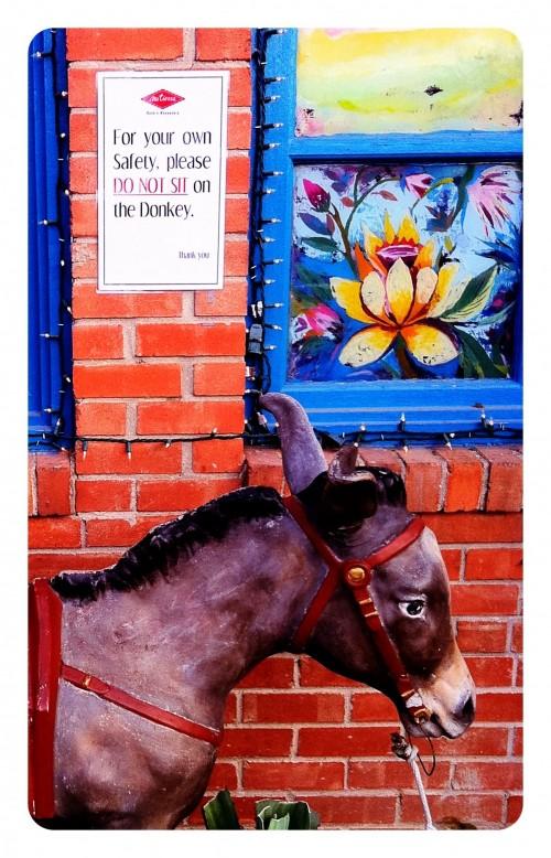 do not sit on donkey