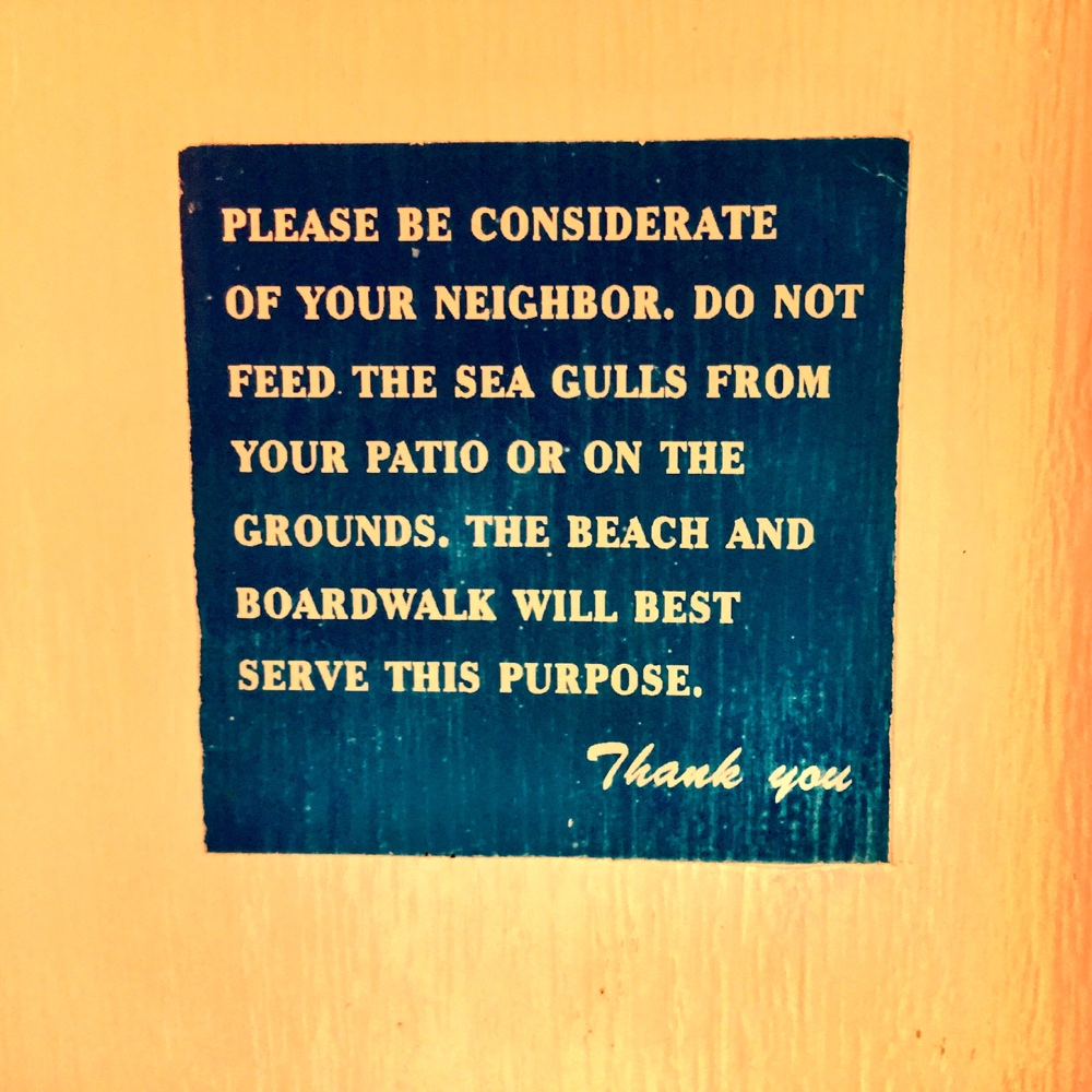 Don't Feed the Gulls