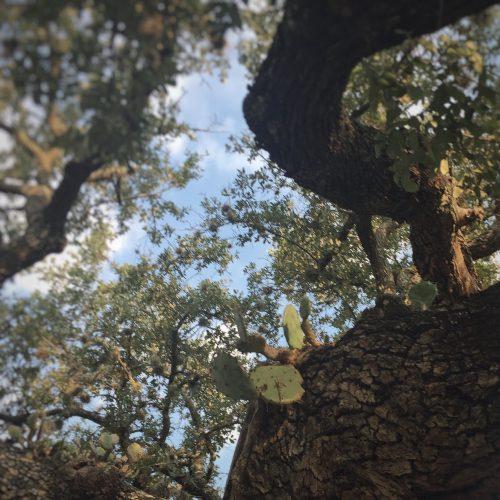 Tree Cactus Two